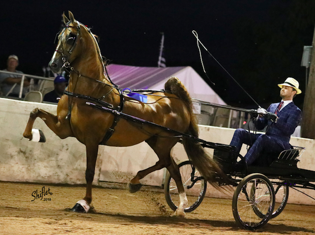 Sir Robert Royse - Congratulations to Amanda Powell on the selection of Sir Robert Royse. Selling Agent: Rose Stables, Receiving Trainer: Clover Leaf Stables