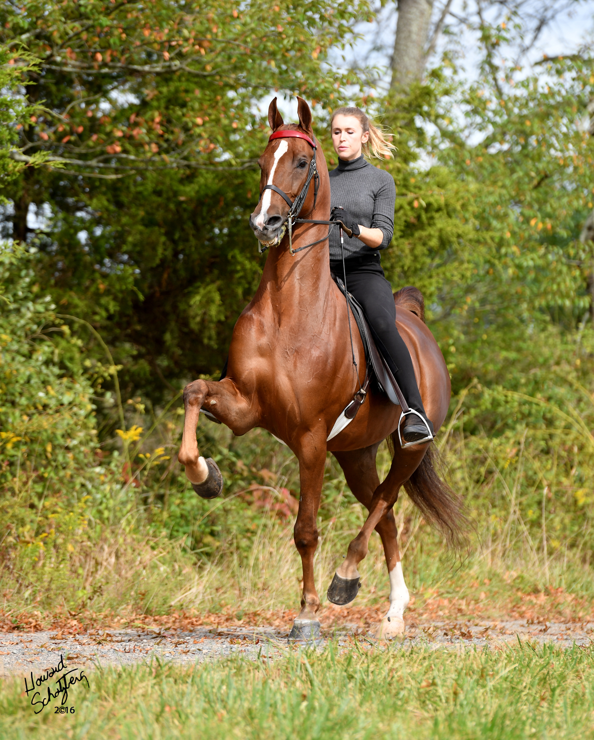 Absolutely Stunning - Congratulations to Britt Mitchell Gutierrez on the selection of Absolutely Stunning. Selling Agent: Randy Stoess Stables, Receiving Trainer: Ingleside Farm