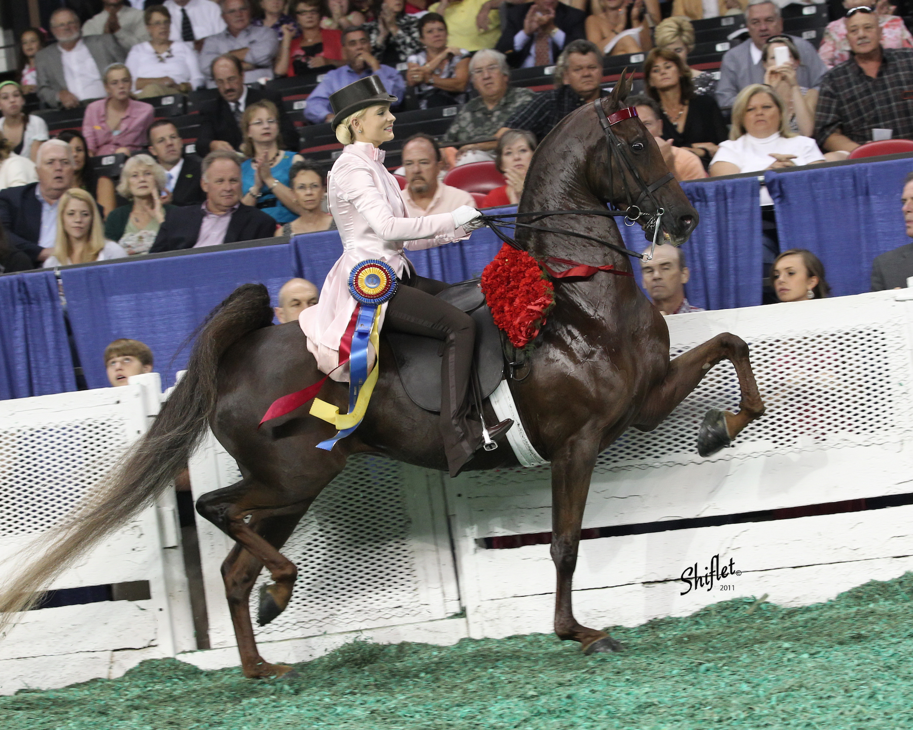 WCC CH With Style and Grace - Sir William Robert x Lady Peridot2014 3 Gaited Ladies Amateur Reserve World Grand Champion2014 3 Gaited Ladies Amateur 15.2 & Under Reserve World Champion2013 3 Gaited Amateur Reserve World Grand Champion2013 3 Gaited Amateur 15.2 & Under World Champion2012 3 Gaited Amateur Reserve World Grand Champion2011 3 Gaited Amateur World Grand Champion2011 3 Gaited Amateur 15.2 & Under World Champion2010 3 Gaited Amateur World Grand Champion2010 3 Gaited Amateur 15.2 & Under World Champion2009 Fine Harness Junior Reserve World Grand Champion2009 Fine Harness Junior Mare World Champion