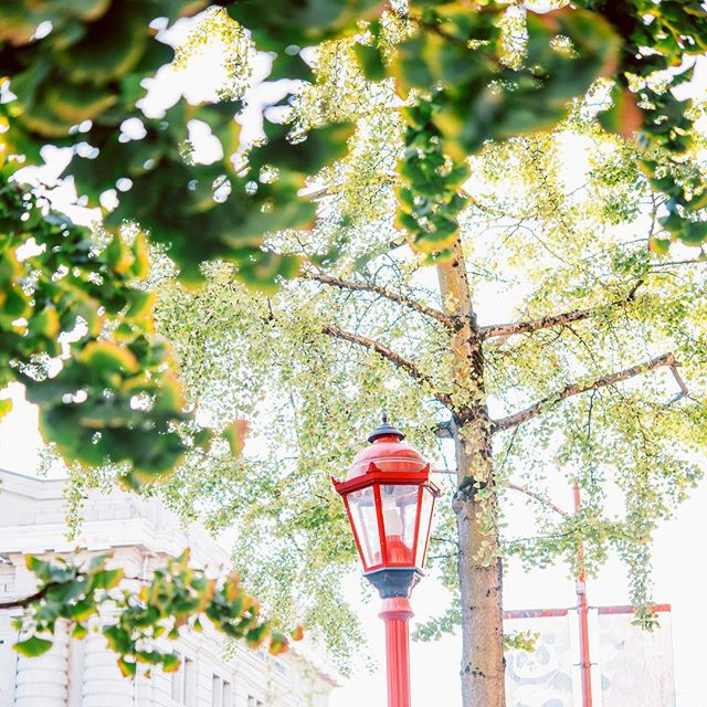 Green is returning to our city streets 🌳 . . . . #chinatown #vancouver #yvr #dailyviews #vanlife #vancity #vancitybuzz #vancouverbc #curiocityvancouver #dailyhivevan #yvrhousing #livelightly #passivehouse #green #lamppost #spring #foliage