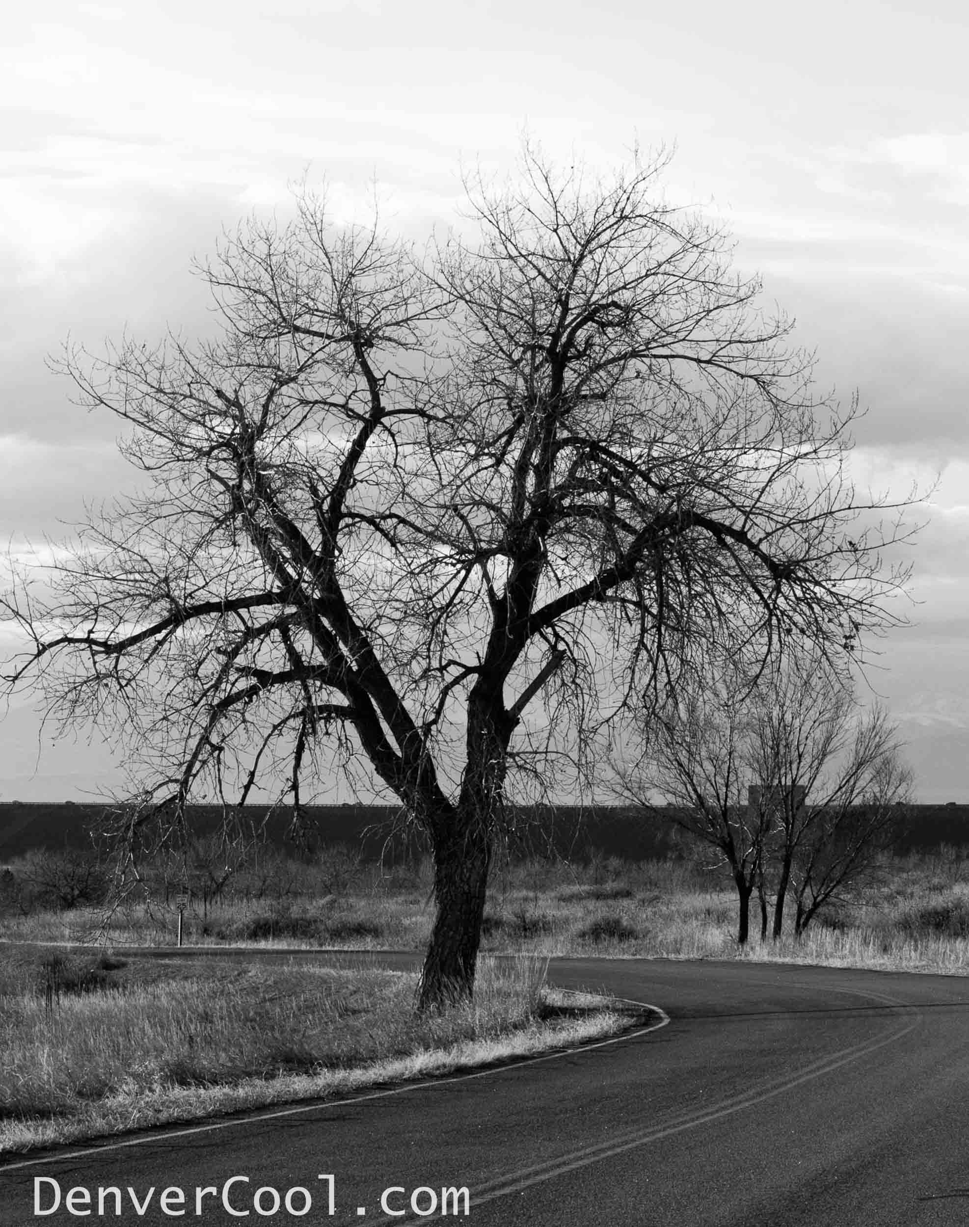 Dead Tree by the Side of the Road