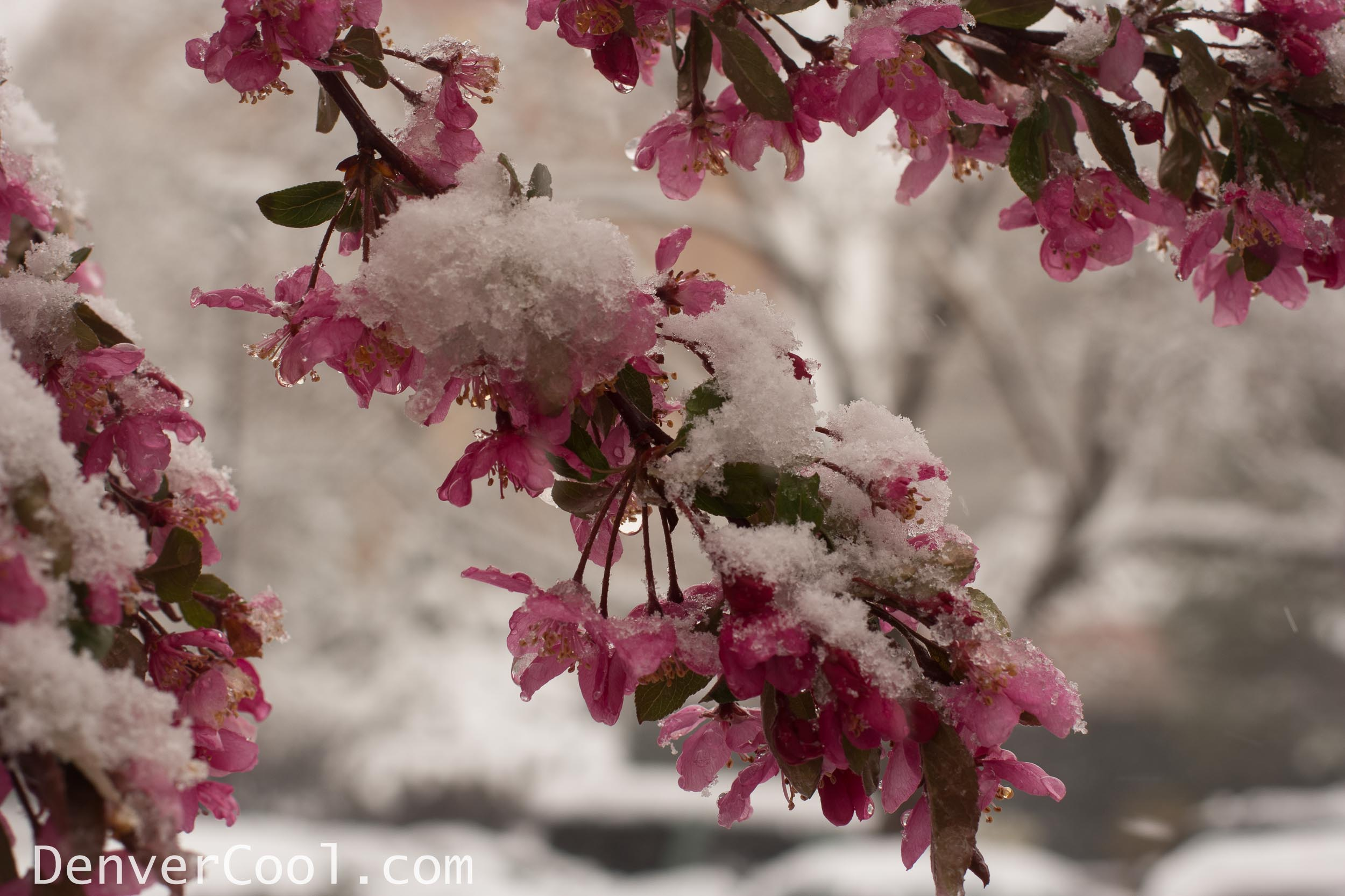 Colorado Spring