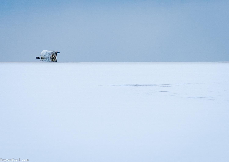 Buoy Blue In Solitude