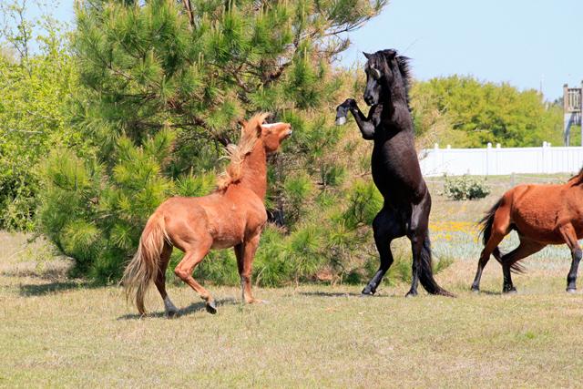 beautiful_horse.jpg
