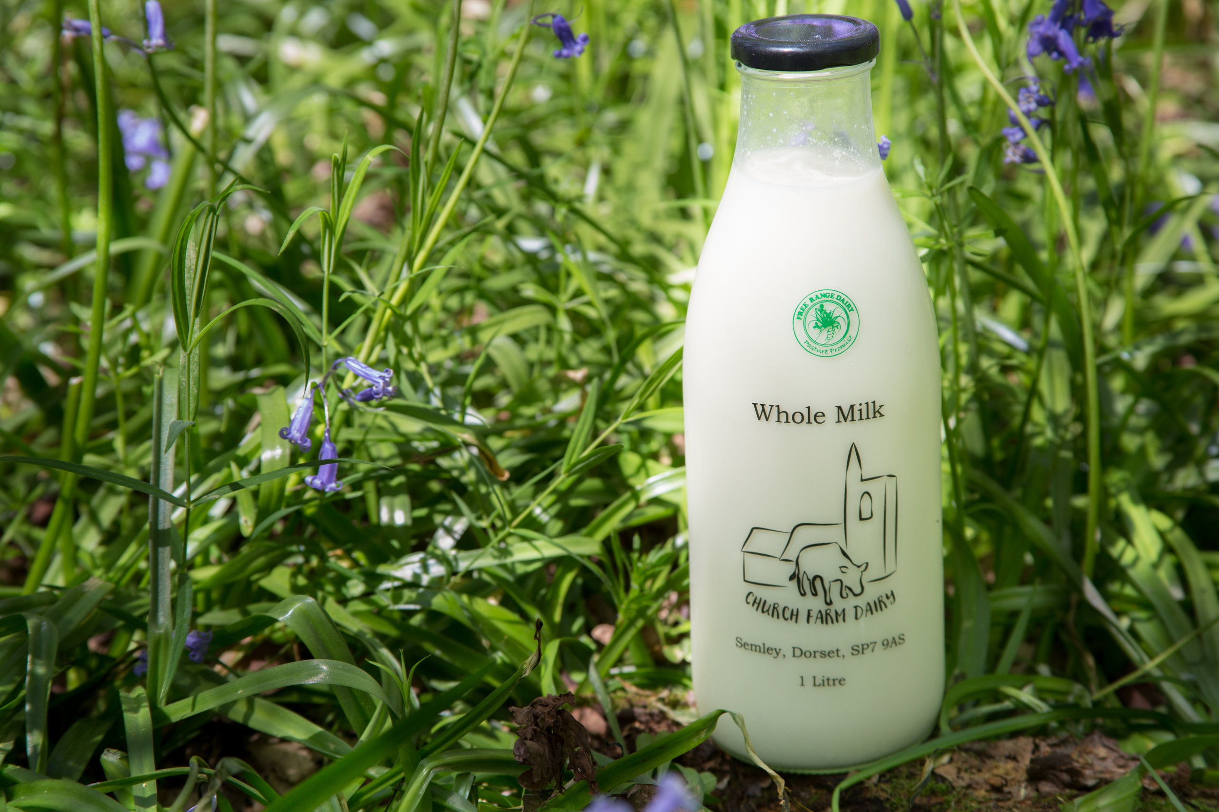 Milk 1.jpg