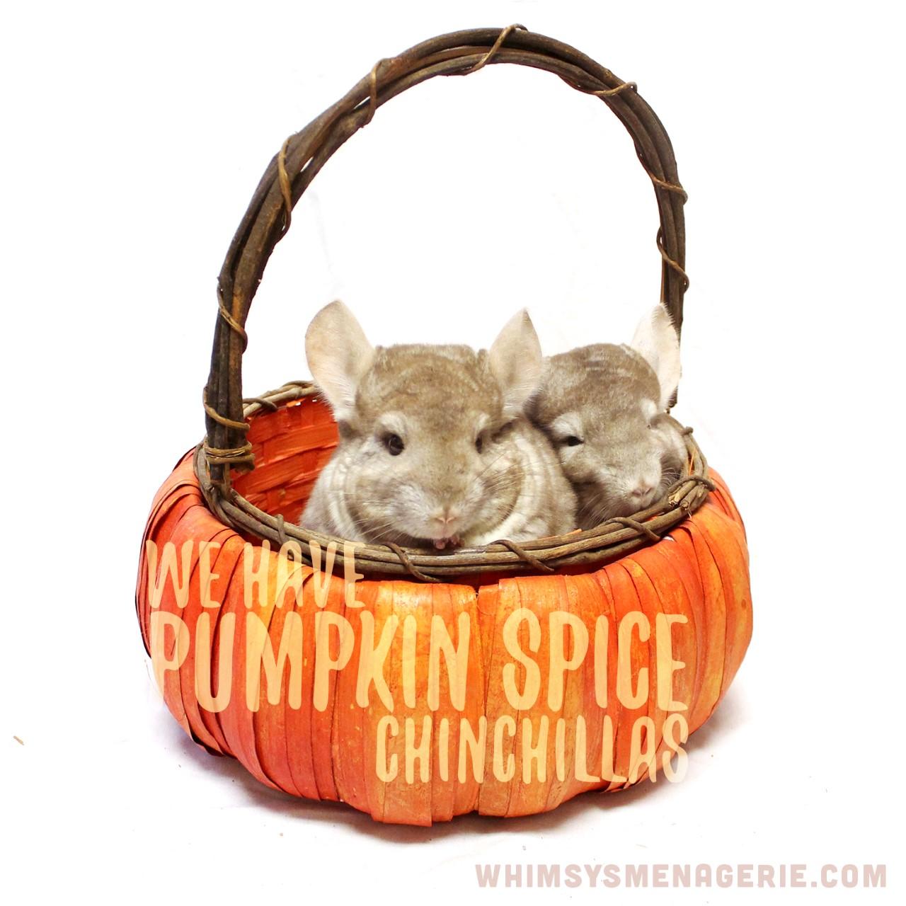 thumbnail_pumpkinspice.jpg