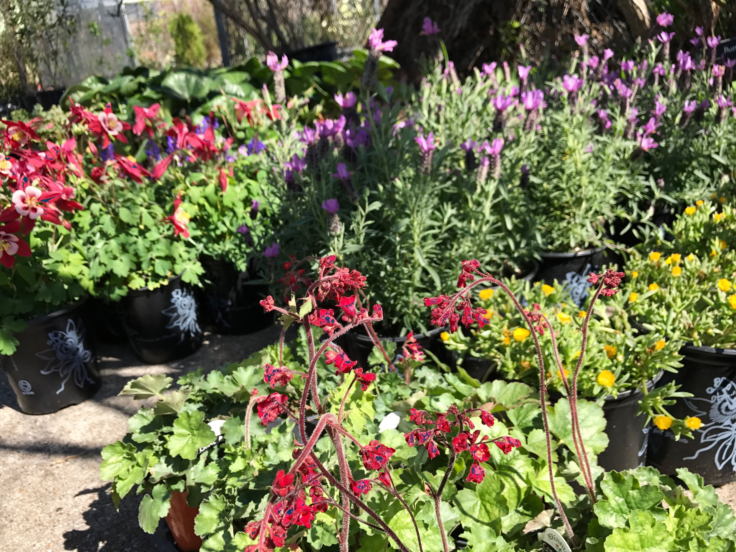 Plant Sale 17.jpeg