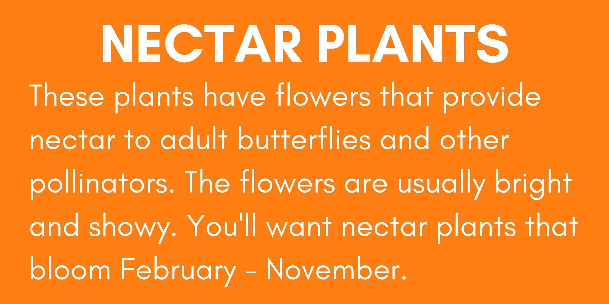 Nectar Plants.jpg