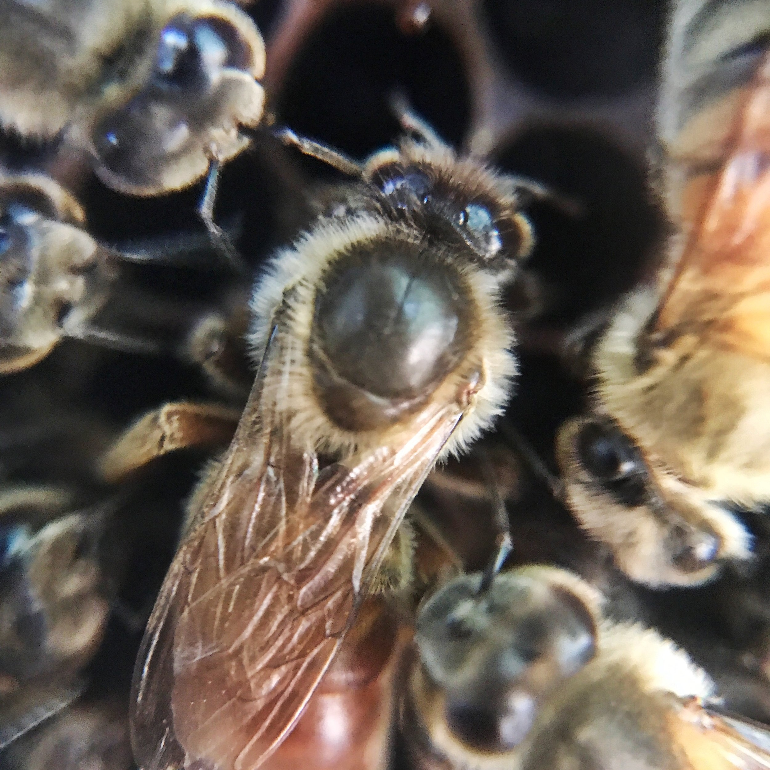 HoneyBee tree - Peer into the world of bees! Learn about the job of each bee and all the work that goes into maintaining a hive. You'll even be able to see the queen surrounded by her court.