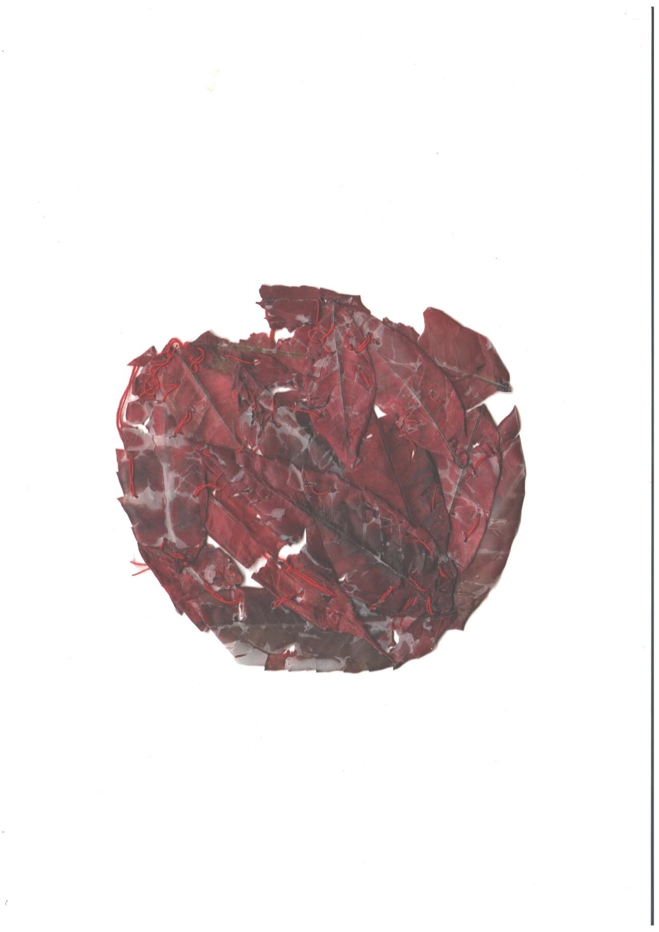 sewn leaves .jpg