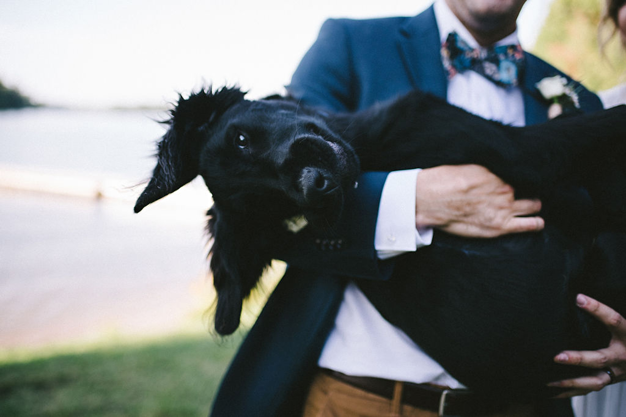 cute puppy at Parry Sound camp wedding