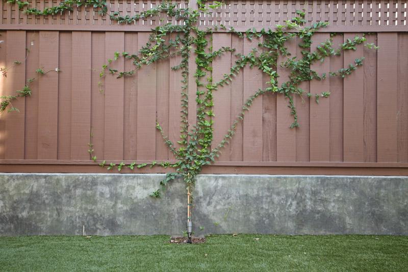 Vines_SC_Green_Builders.jpg