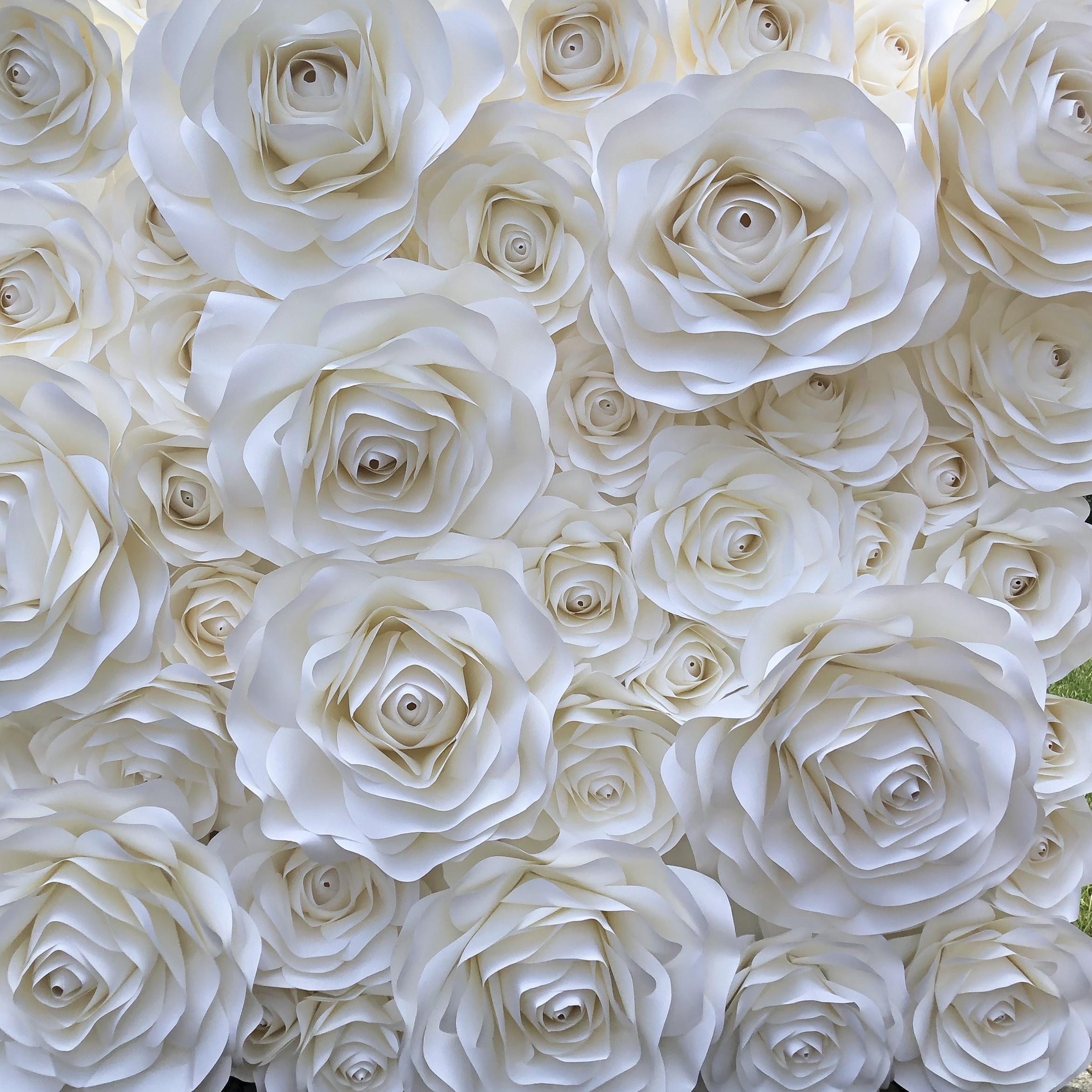 Lily   white on white