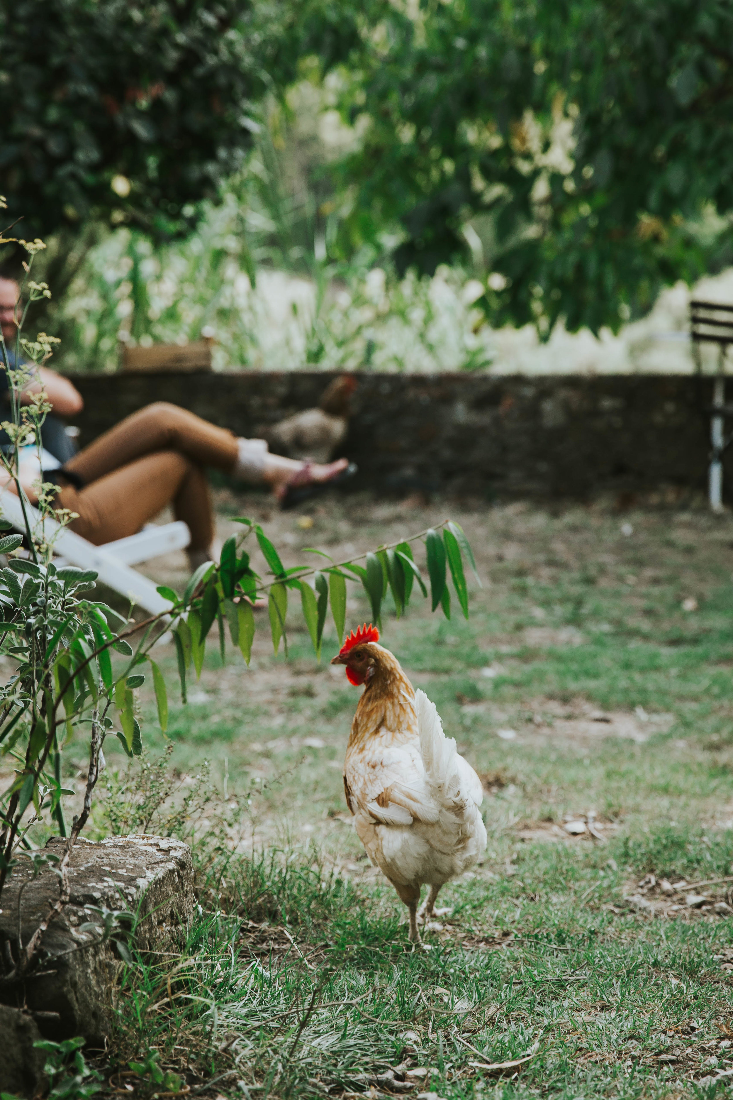 And because who doesn't like a friendly chicken. :)