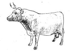 big_bull.jpg