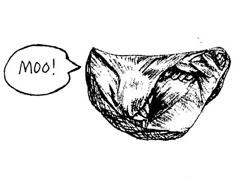 cartoon_moo.jpg