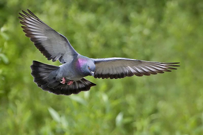 Color vision - Photo: Alan D. Wilson, www.naturespicsonline.com
