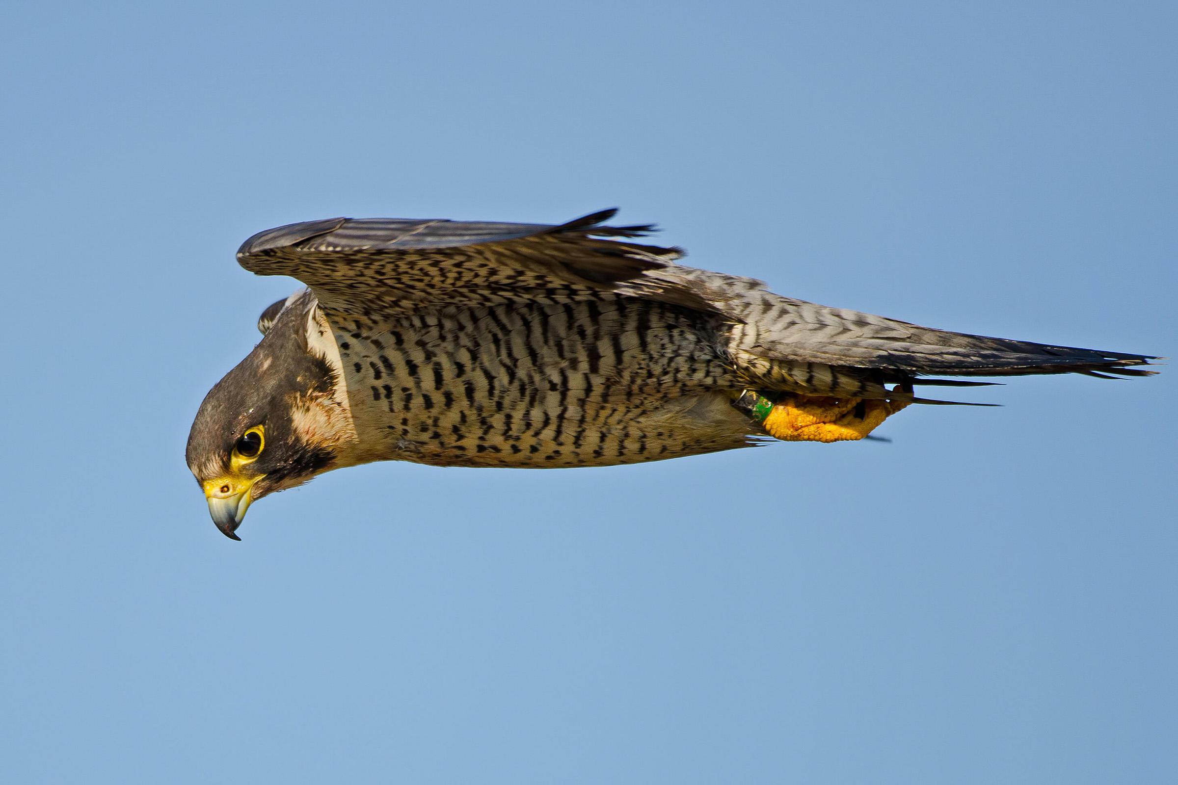 Visual acuity - Photo: Brian Kushner/Audubon Photography Awards