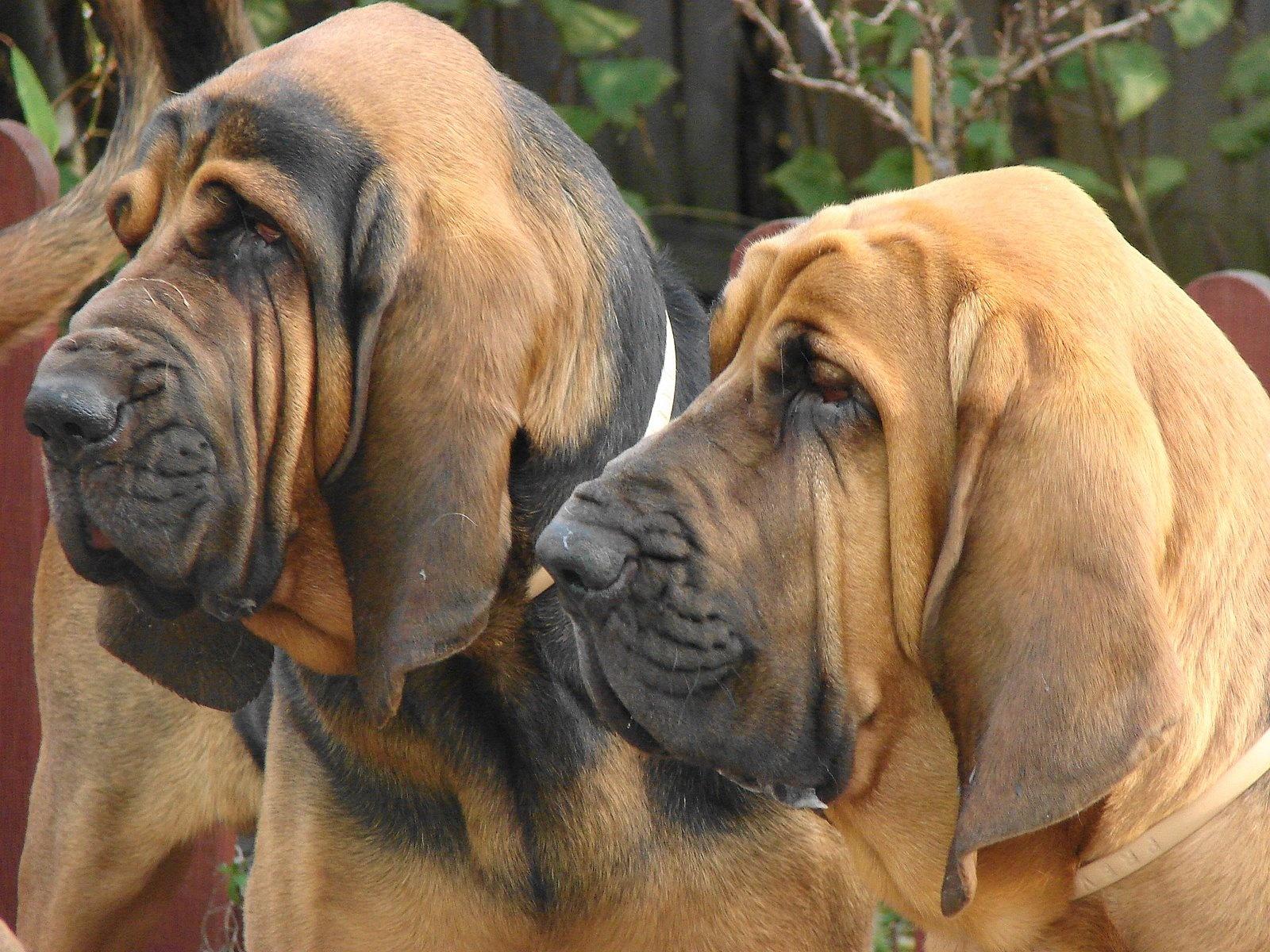 Olfaction - Photo: Dogpedia