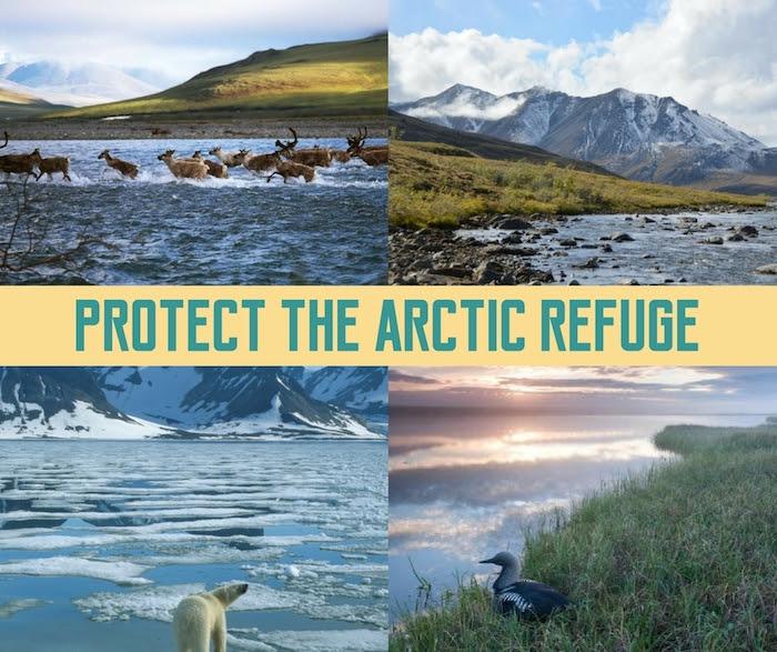 ArcticRefuge.jpg