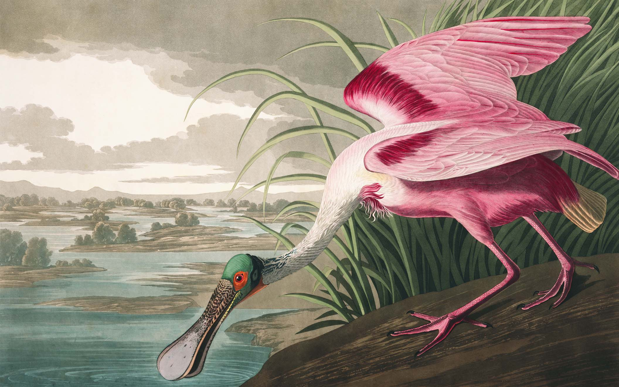 A Roseate Spoonbill.. A Bird You Can Only Imagine Unless You Live in South East America and South America.... Like a Platypus and a Flamingo Had a Love Child.