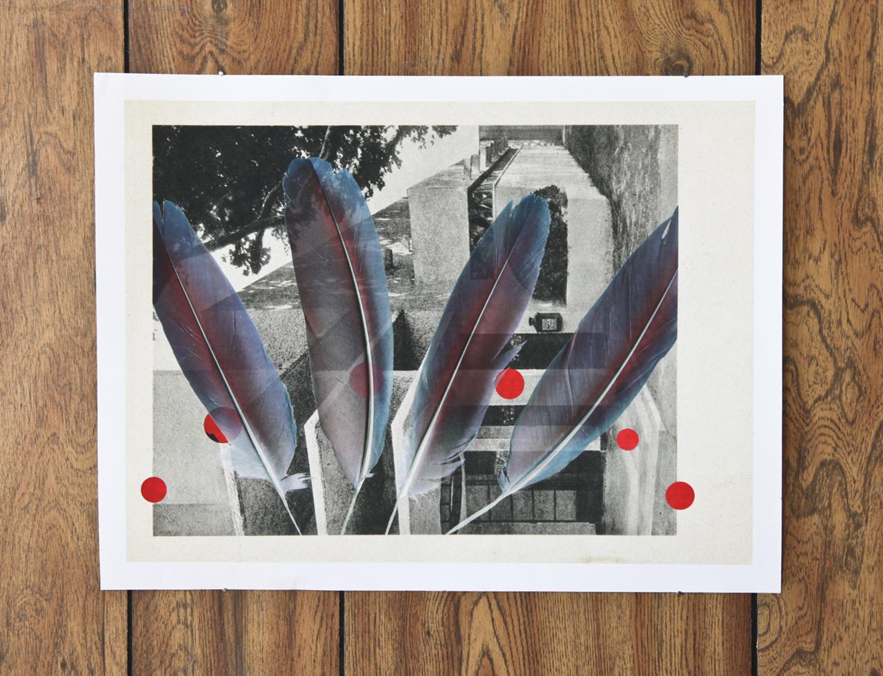 "Sari Carel ""Flight Song"", Archival Print, 12x16 inches, 2015."