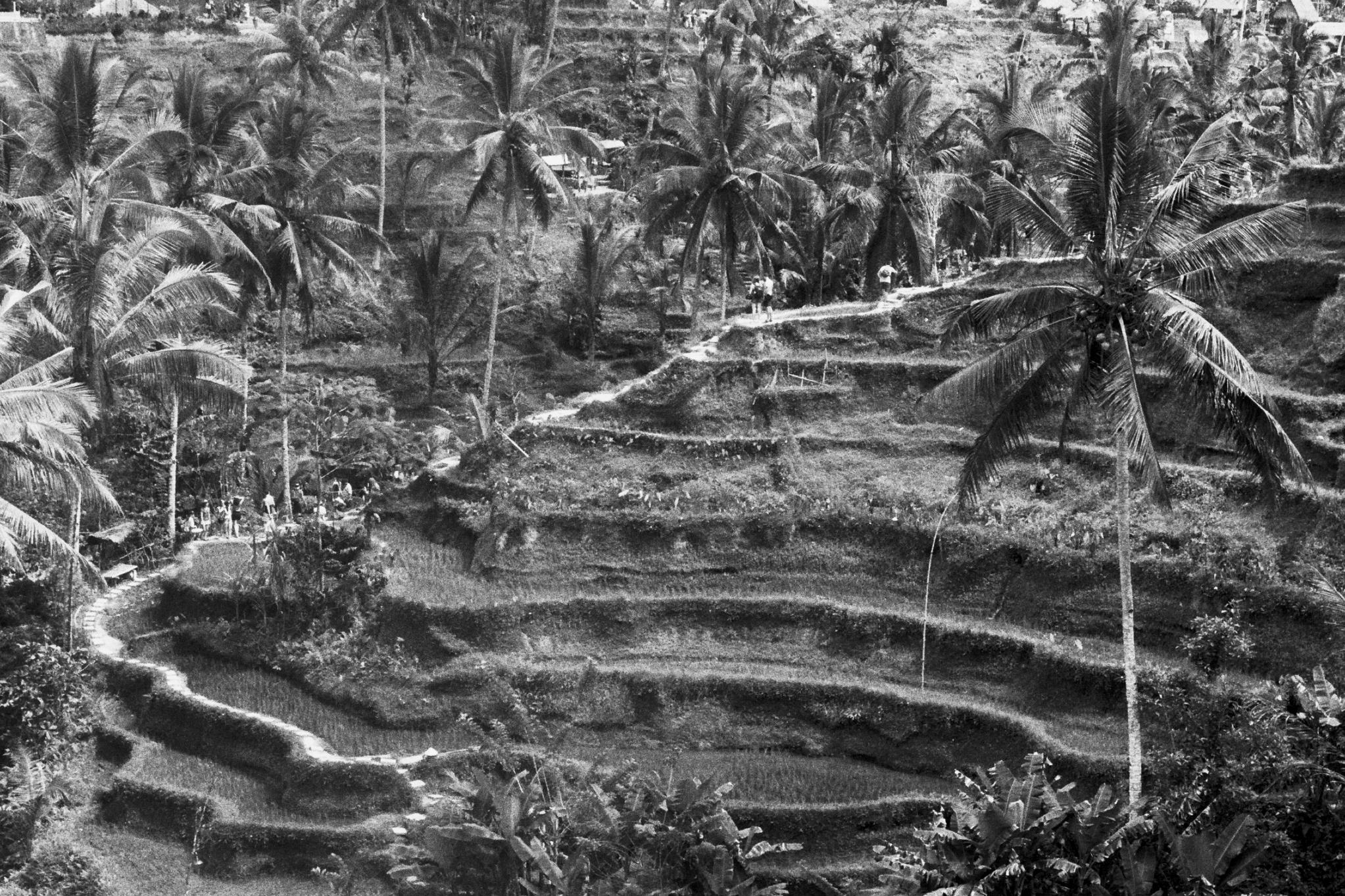 Tegallalang Rice Terrance, Bali, 2017