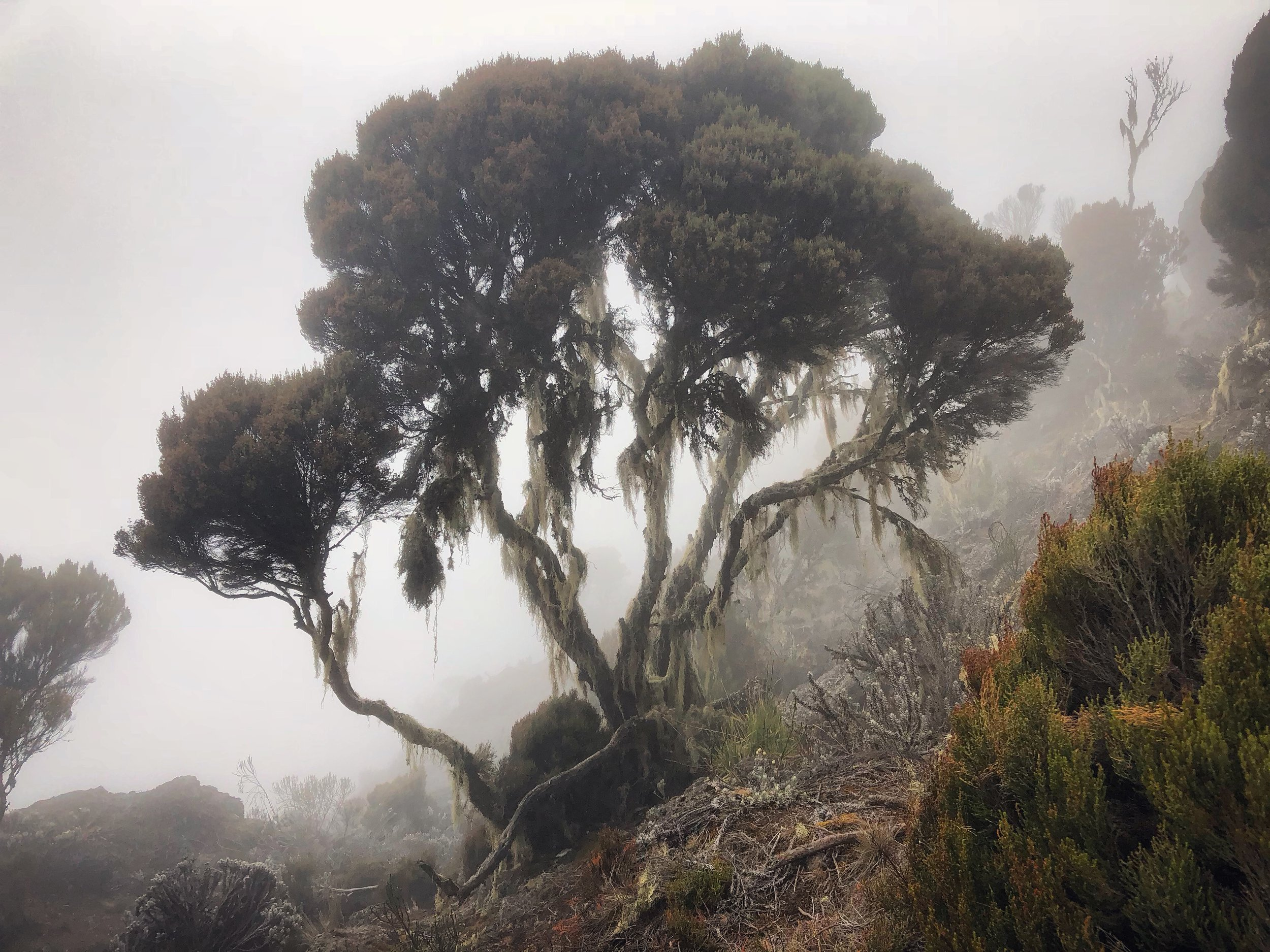 We loved the misty atmosphere and vegetation