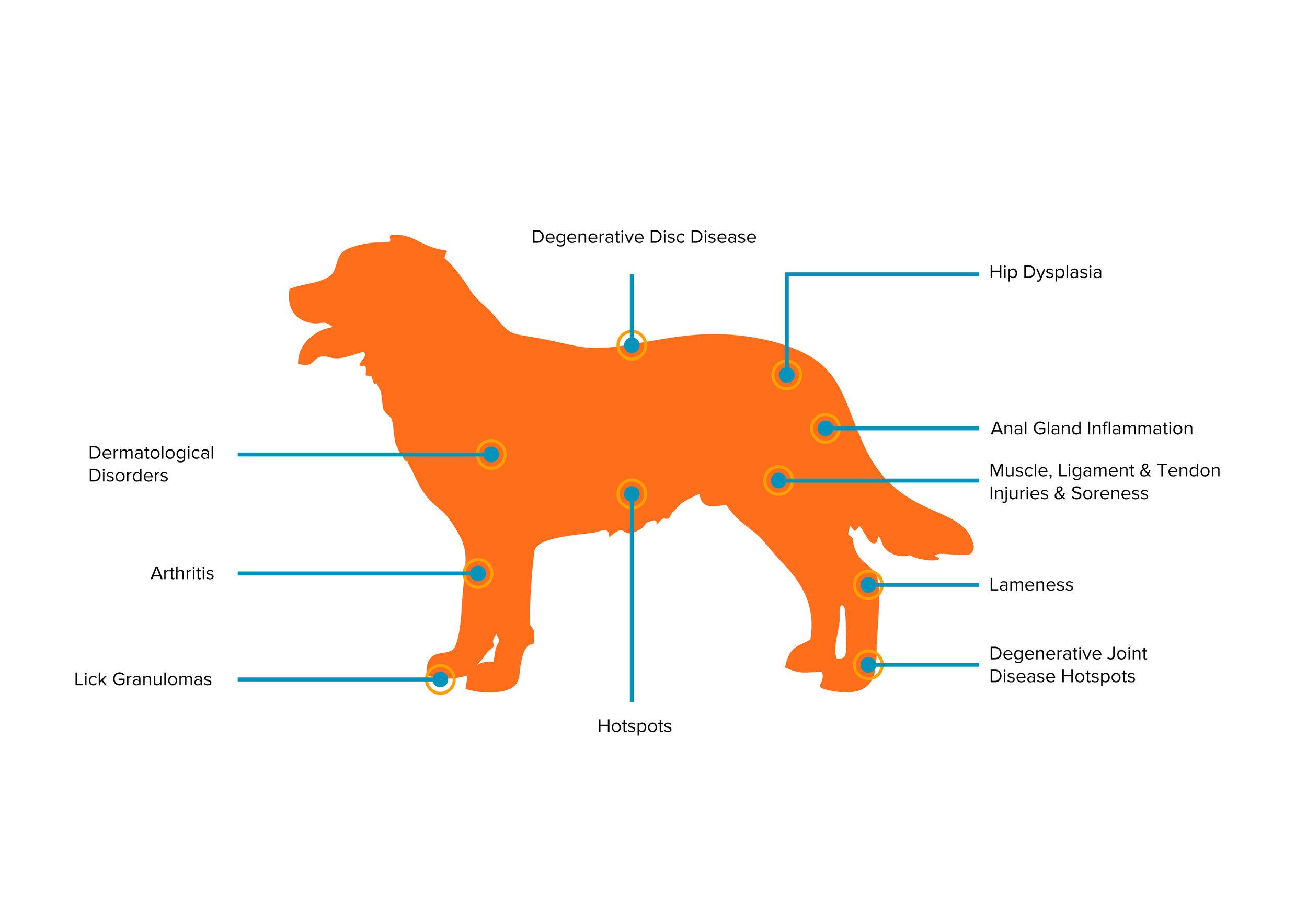Dog Image-Updated-01.jpg