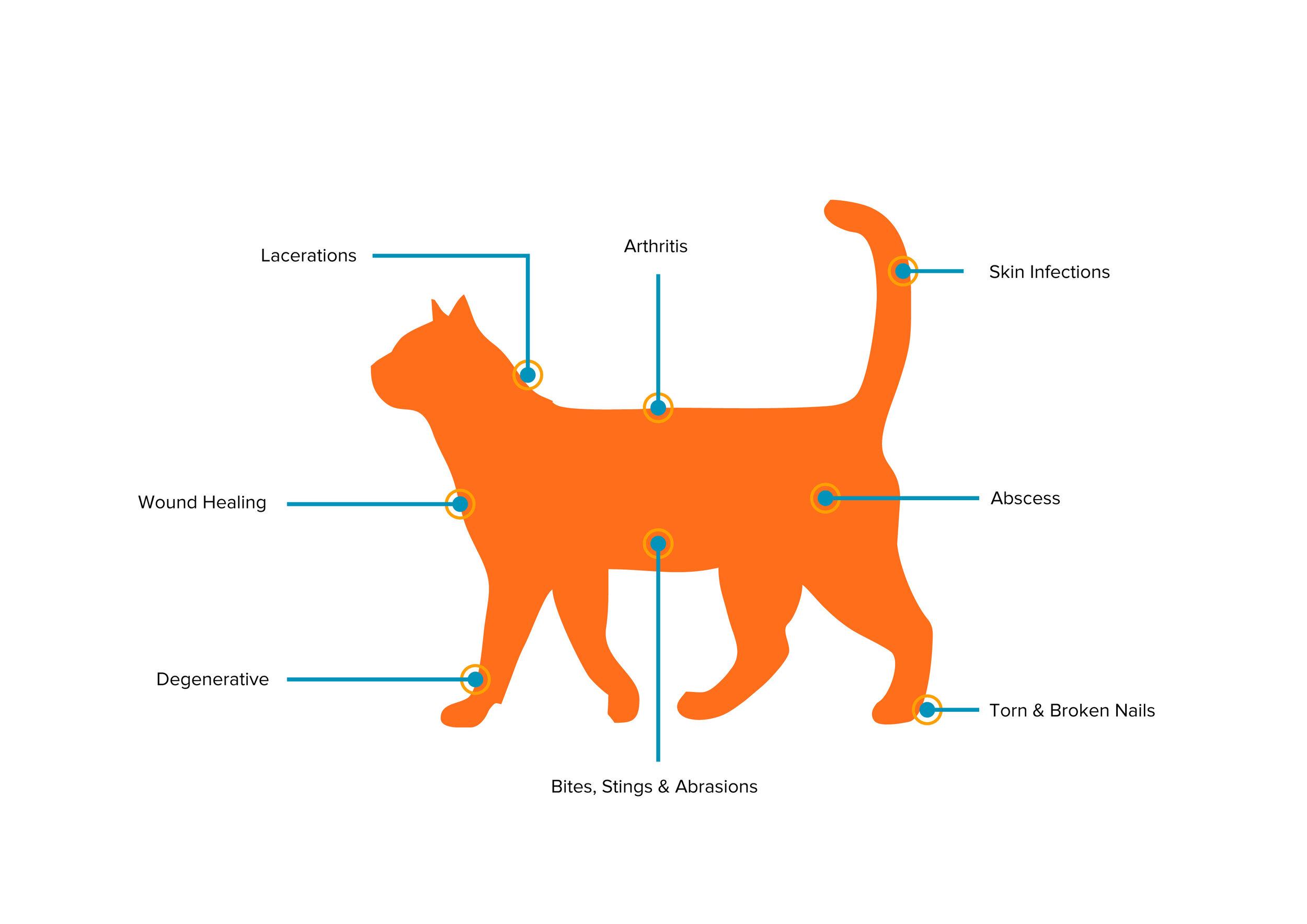 Cat Image-Updated-01.jpg