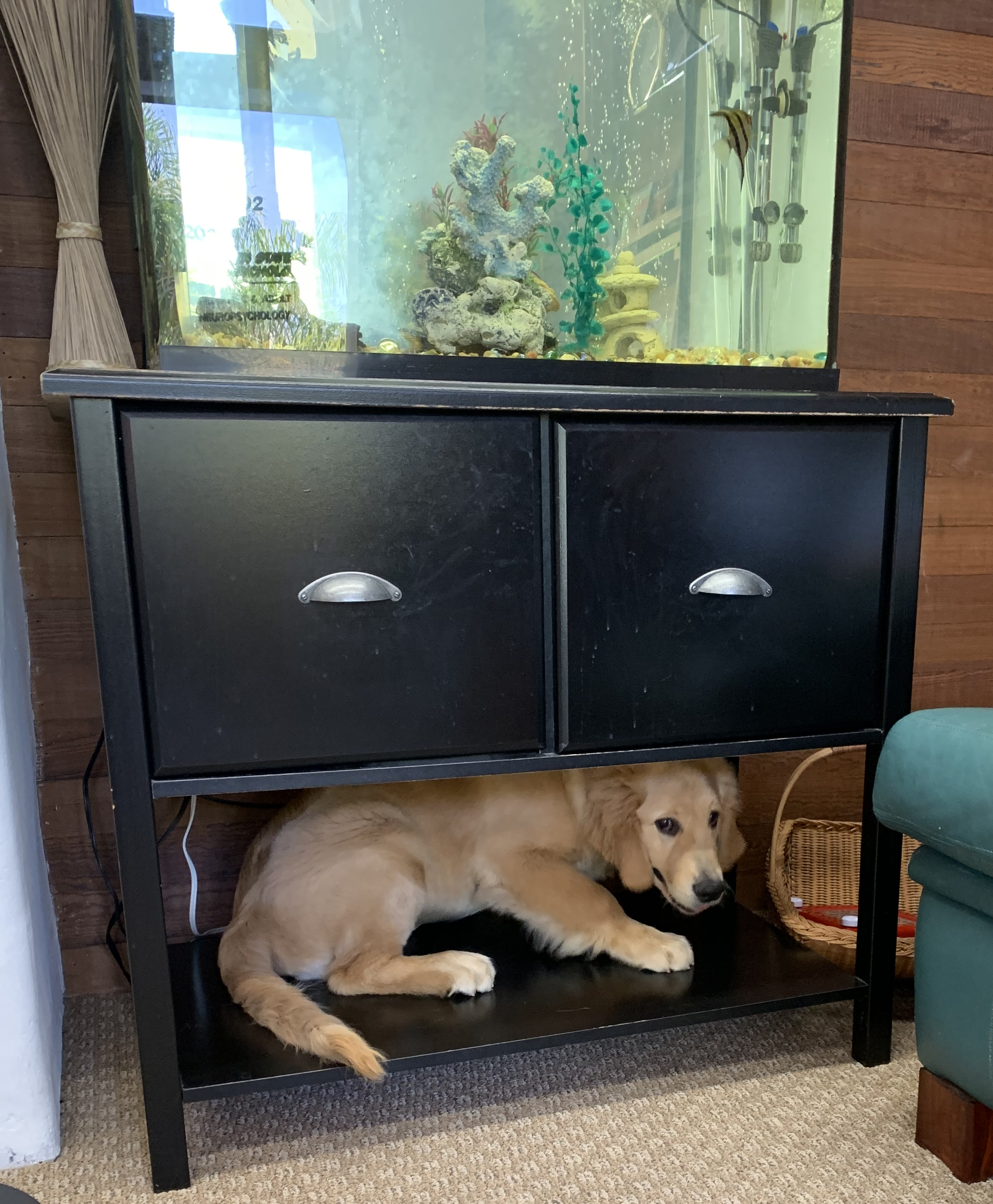 """May 2, 2019 """"Oh uh, hi! I did not hear you walk in.."""""""