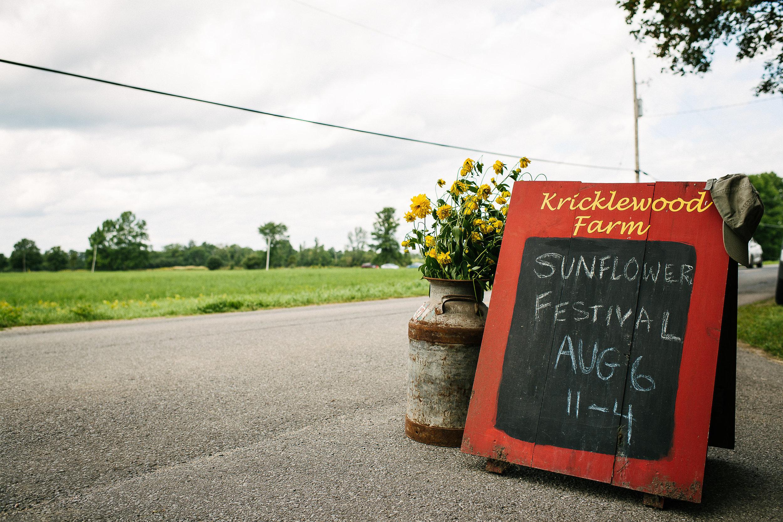 Sunflower Festival 2017 ViaraMileva-130004vm.jpg