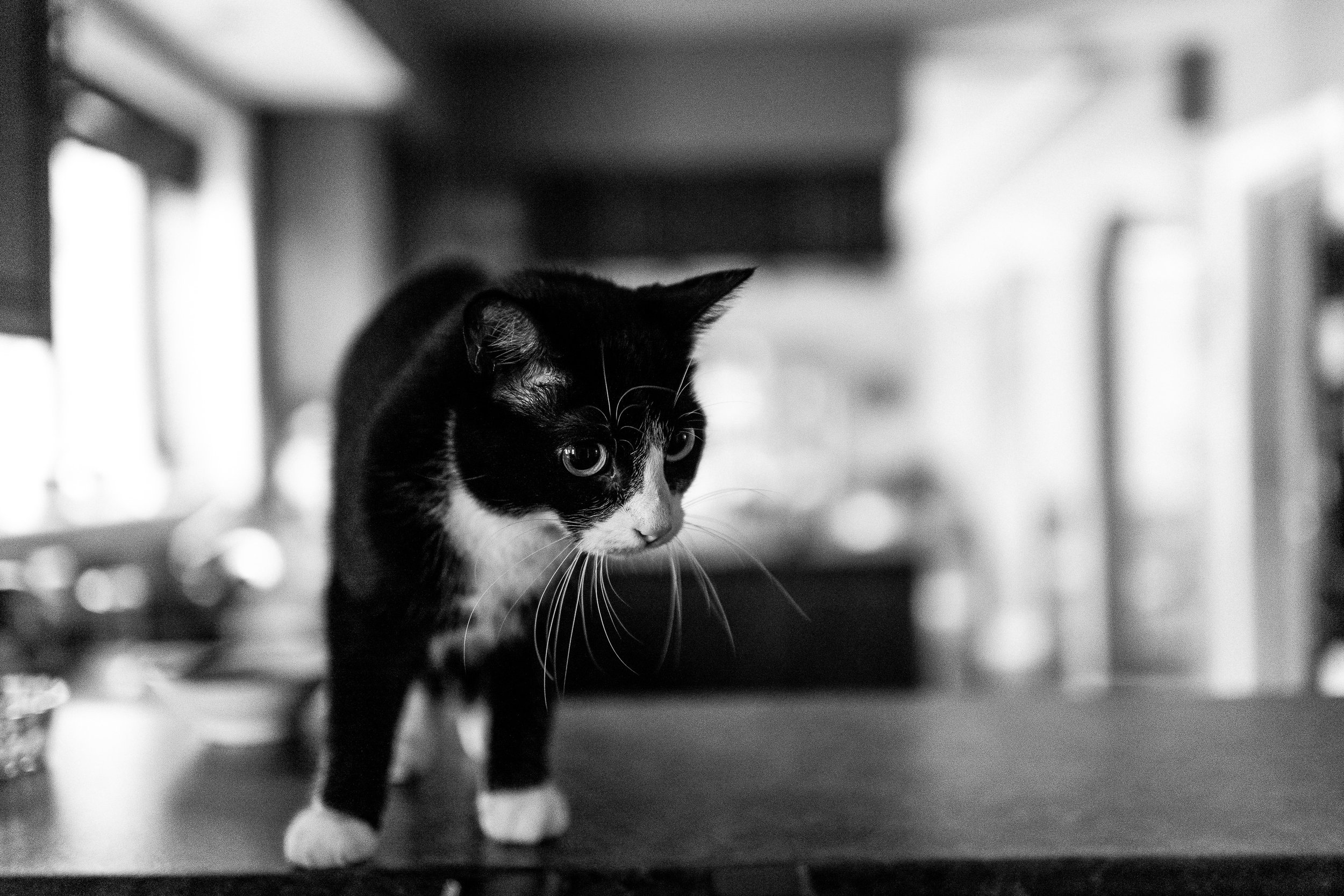 family documentary photography with cats and dogs-100740vm.jpg