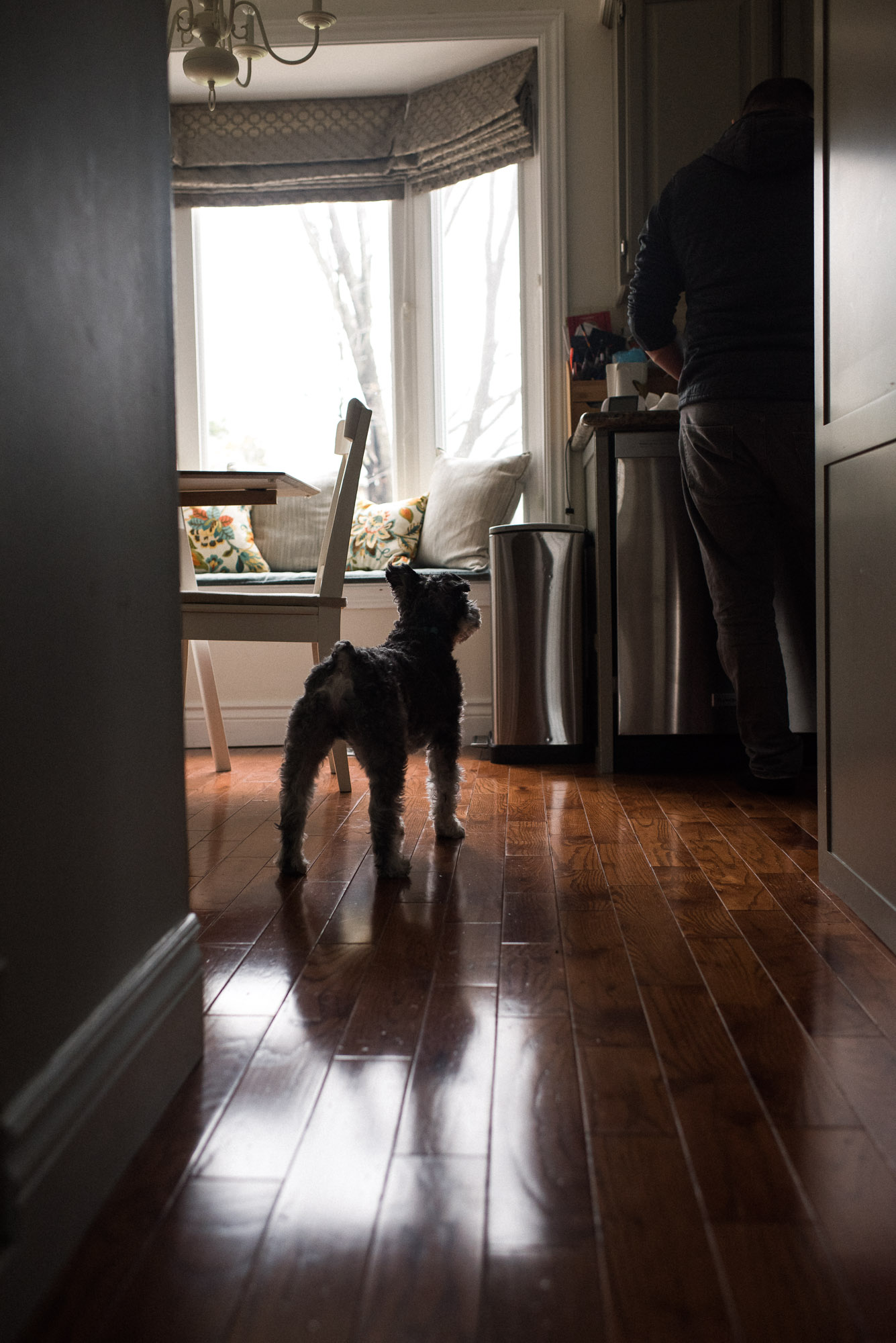 dog looks up toward counter in the kitchen