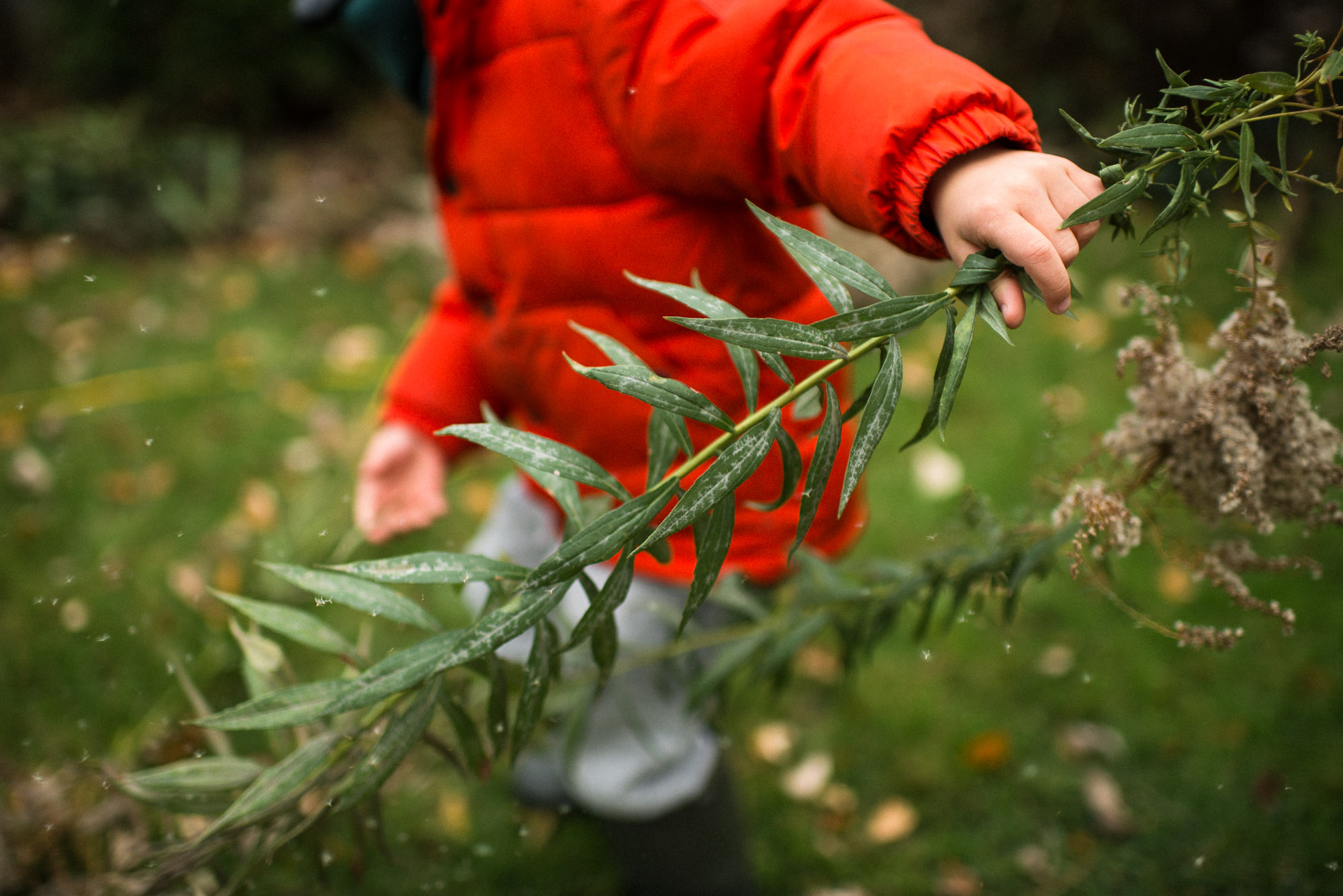 hand of boy in orange coat holds green shrubbery