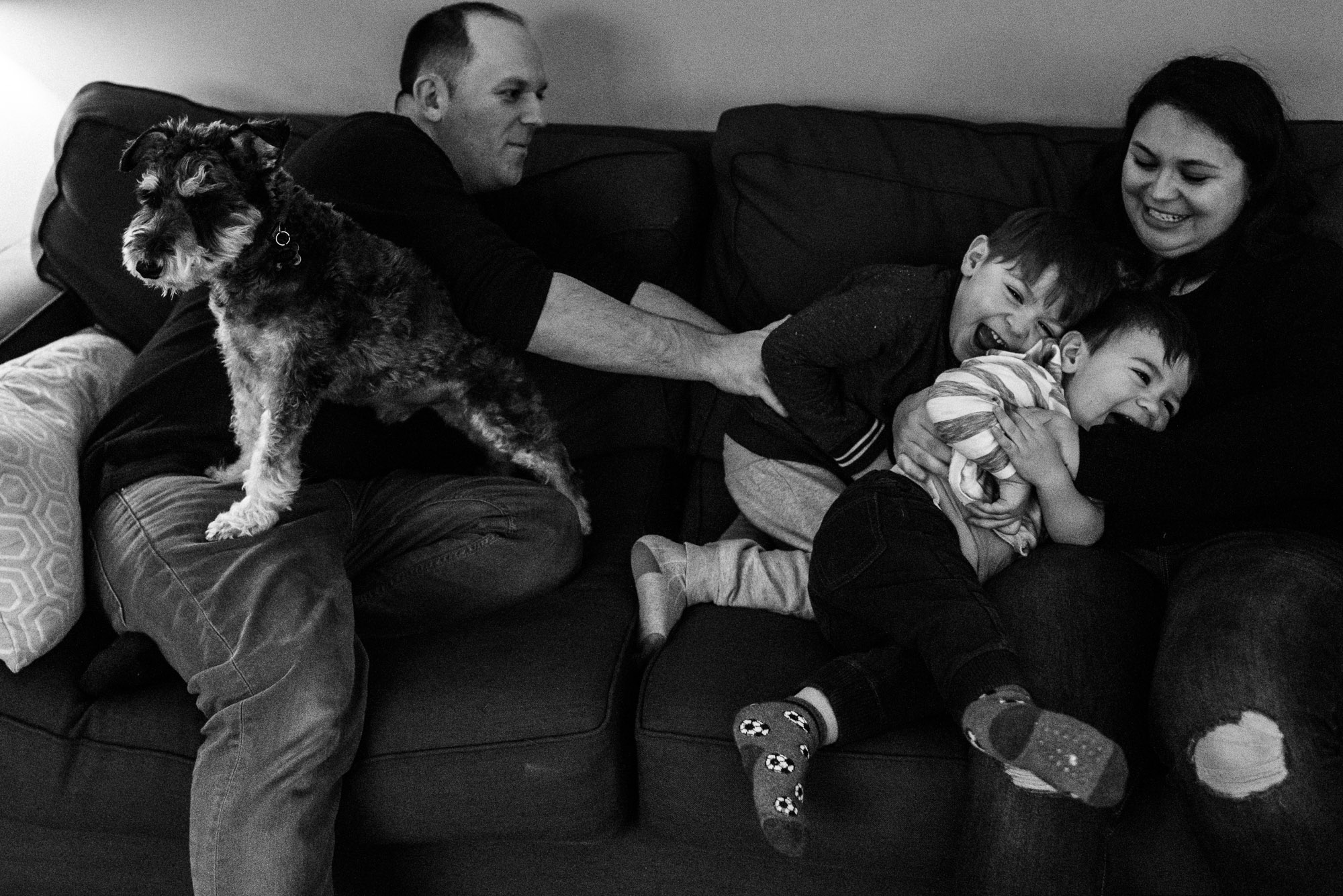 mom and dad play with their two sons on the couch with their terrier