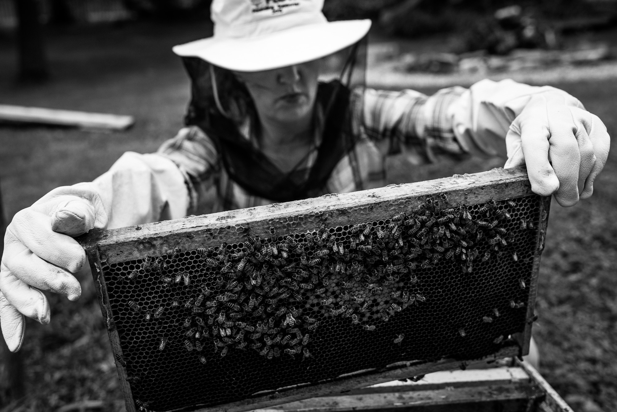 woman in beekeeping outfit holds up a panel of a bee hive