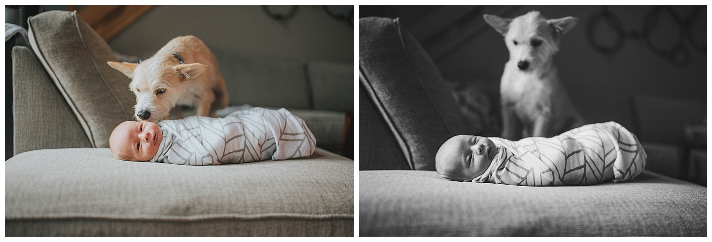 Milwaukee-Newborn-Photographer (31).jpg
