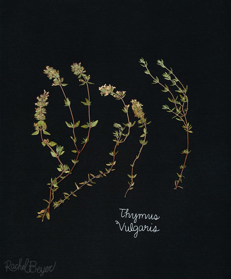 thyme-1.jpg