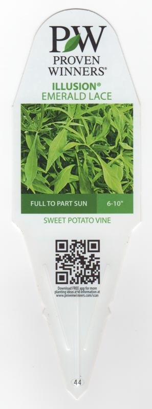 Ipomoea Sweet Potato Vine Illusion Emerald Lace.png