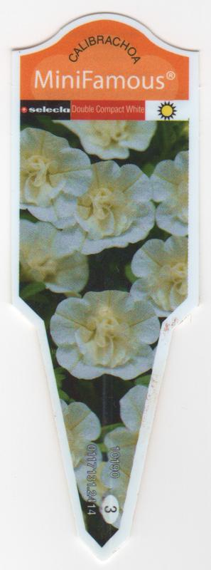 Calibrachoa MiniFamous Double Compact White.png