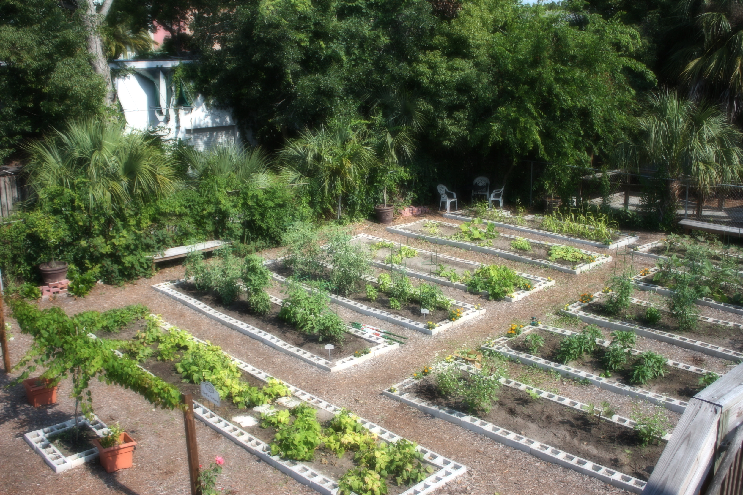 From muscadine vines and fig trees to sungold tomatoes and heirloom okra,the Chef's Garden at 29 South provides the kitchen with the freshest ingredients available.