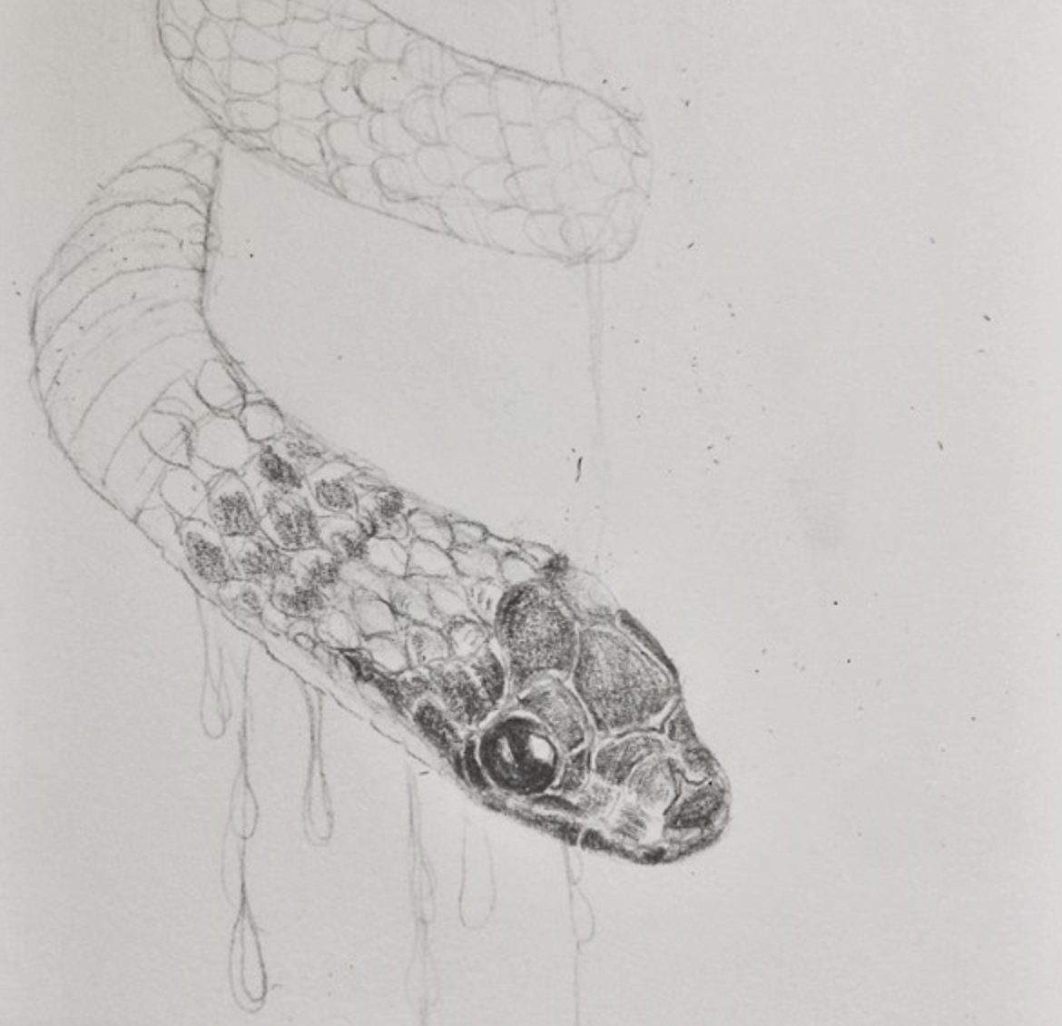 One of many abandoned snek drawings…