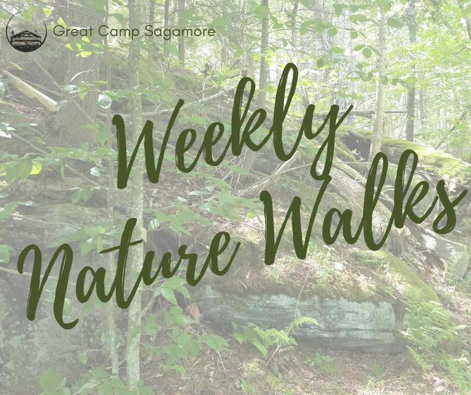 Weekly Nature Walks FB Post.jpg