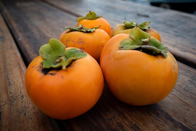 First ripe persimmons off our tree! Excited to try this non-astringent variety and looking forward for more of these beauties to come. #autumnfruits #persimmons #permaculturefarm