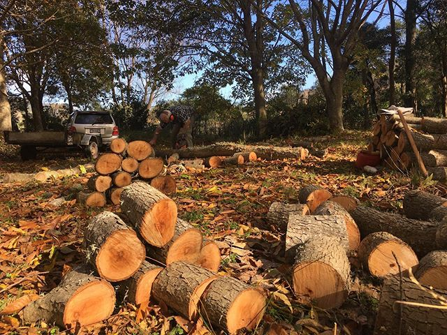 Winter working bee on the farm focus on firewood. We have gradually  been taking down some of our pecan trees. Harry's careful noting of the yield of each tree over the last 20 years was the key for the decision process. In their place we are planting various other fruit trees. #farmlife #firewood #organicfarmsnz