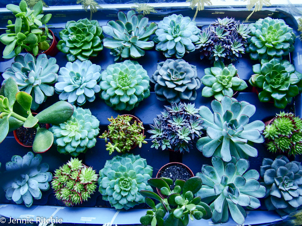 Succulents ready to be placed into the concrete designs by Ail + El, Dublin.