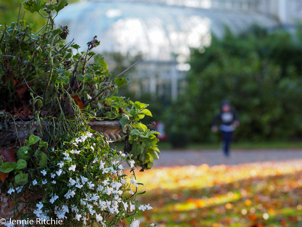Farmleigh House gardens