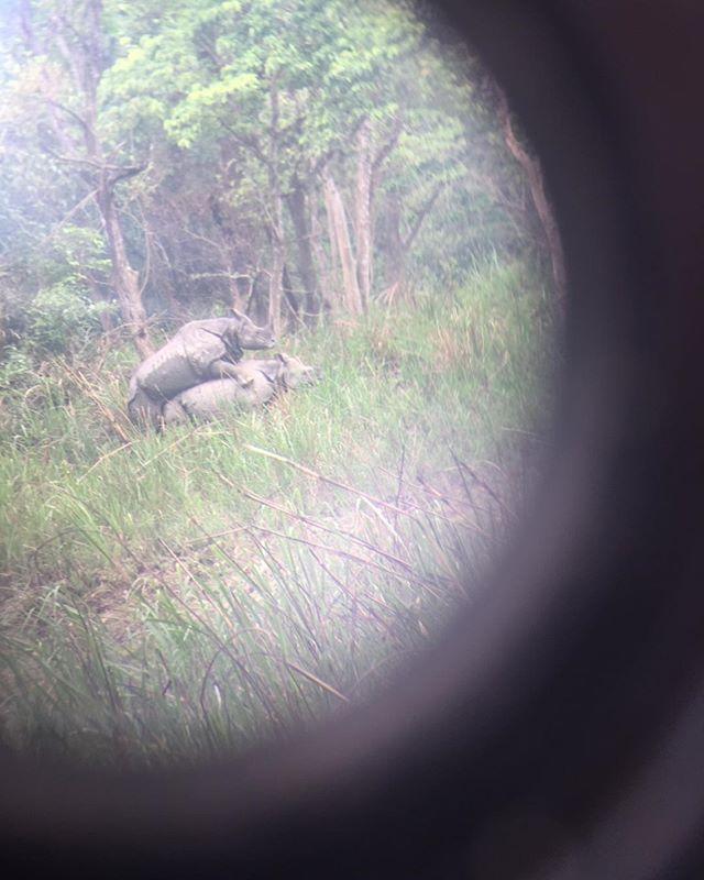 Rhino love in #Chitwan National Park