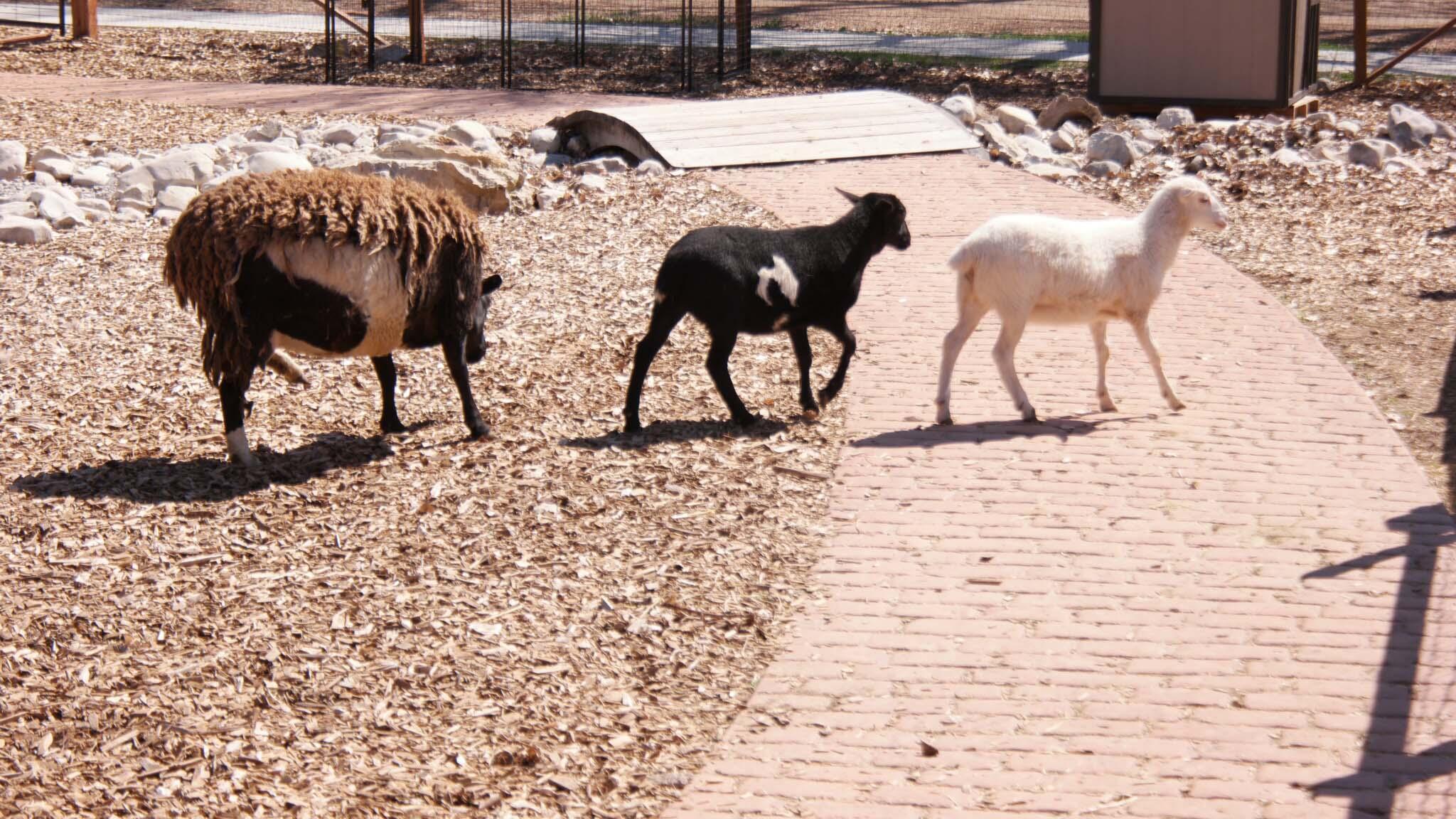 Petting Corral